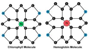 Chlorophylle Molécule
